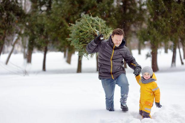 Trudno wyobrazić sobie Boże Narodzenie bez choinki. Wiele osób chce cieszyć się niepowtarzalnym zapachem igieł, dlatego marzy o naturalnym, żywym drzewku. Dobrym rozwiązaniem jest wówczas rodzinna wyprawa na plantację. Tam z łatwością wybierz