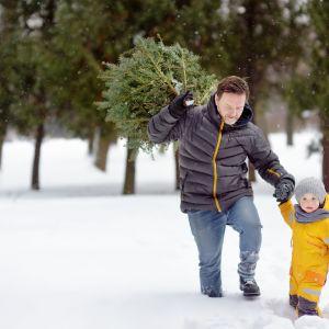 Narzędzia ręczne JUCO - wyprawa po drzewko świąteczne. Fot. 123rf