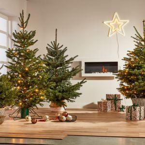 Piękne pomysły na świąteczną aranżację wnętrza. Na zdjęciu: choinka jodła kaukaska w donicy 120-150 cm ukorzeniona, cena 89,98 zł. Fot. Castorama