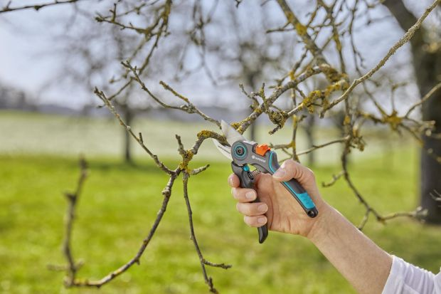 Wiosna to czas, gdy przyroda budzi się do życia. To doskonała okazja, żeby zacząć pierwsze porządkowe prace w ogrodzie i pomyśleć o przycinaniu drzew.