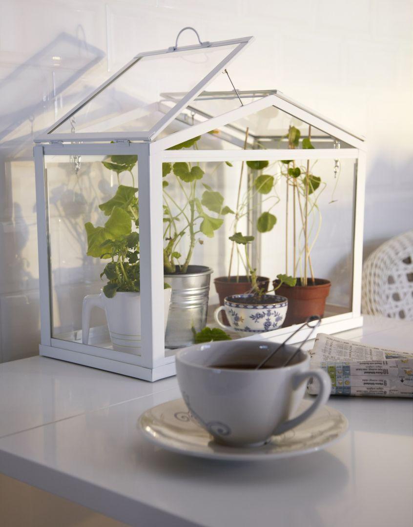 Miniszklarnia - pomysł na zioła w domu. Fot. IKEA