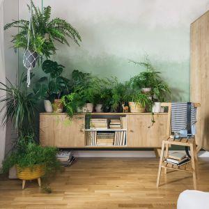 Domowa dżungla na komodzie to najlepszy pomysł na dekorację salonu lub sypialni. Fot. VOX