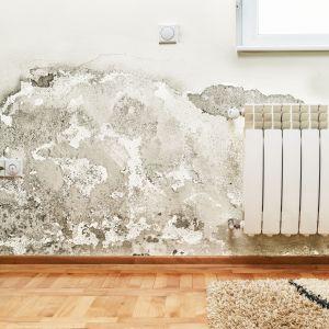 Zagrzybiona ściana w domu. Fot. Wienerberger