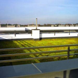 Na zdjęciach: propozycja zielonego dachu od firmy BMI Icopal, fot. mat. prasowe