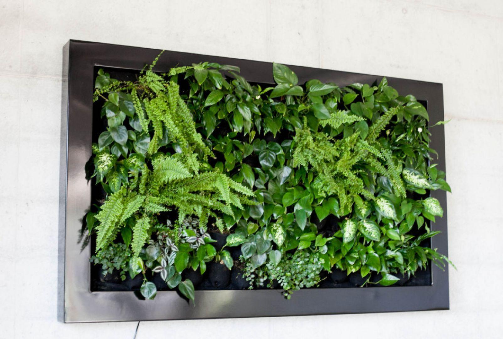 Zielony obraz - pomysł na miniogród wertykalny na ścianie. Realizacja firmy Hadart. Fot. Hadart
