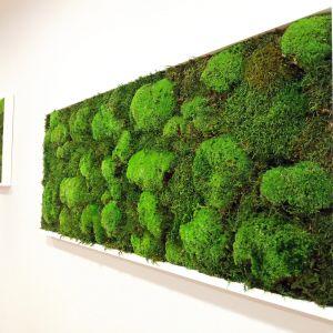 Obraz z mchu na ścianie. Realizacja firmy Hadart. Fot. Hadart
