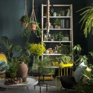 Gdy brak budżetu na prawdziwą zieloną ścianę, zbuduj ją po prostu z regału, na którym ustawisz piękne rośliny. Fot. VOX