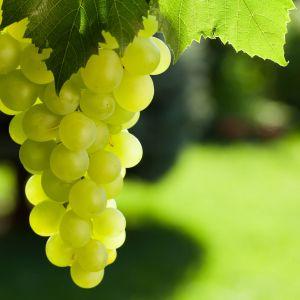 Owoce to nie tylko cukier i woda, ale również bomba witaminowa i bogate źródło cennych związków, jak np. kwasy organiczne, flawonoidy, karotenoidy czy antocyjany.