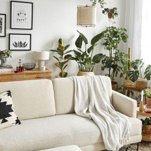 Trendy: rośliny w salonie. Fot. WestwingNow.pl