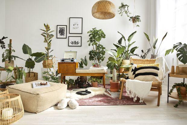 Rośliny we wnętrzu to trend, który nie mija. Trwa też modnaroślinne inspiracje. To nie tylko głęboki, soczysty odcień zieleni na meblach czy ścianach w salonie, ale także kwiatowe wzory, bogactwo roślin i dekoracji z motywami owadów.
