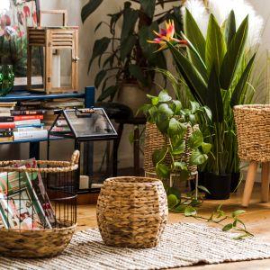 W rytmie natury – zalety roślin w mieszkaniu Fot. Home & You