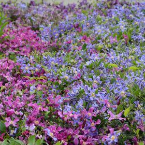 Aby kwiaty balkonowe czy rabatowe były naprawdę piękne, trzeba wiedzieć, jak je pielęgnować i dbać o ich zdrowie. Fot. Leroy Merlin