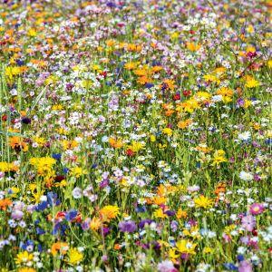 Kwietna łąka to modny i bardzo ekologiczny pomysł na ogród. Fot. Leroy Merlin
