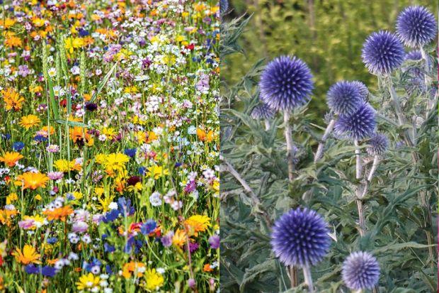Poradnik: Jak dbać o zdrowie roślin w ogrodzie?