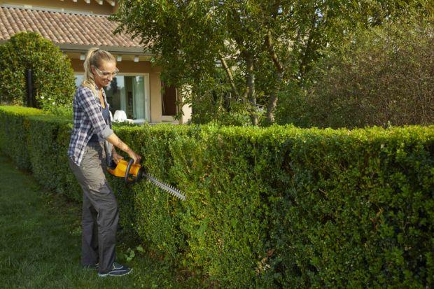 Lato w ogrodzie. Jakie prace należy wykonać? Sprawdź!
