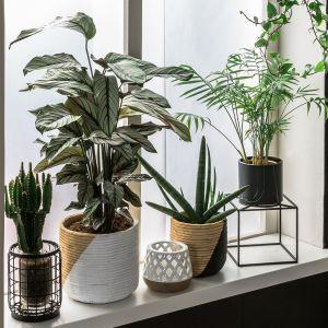 Na parapetach postaw ulubione rośliny i kwiaty w ozdobnych doniczkach i osłonkach. Przez całe lato będą zdobiły twoje okno i dekorowały wnętrze. Fot. Salony Agata