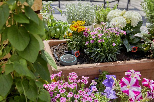 Nawadnianie roślin, szczególnie w okresie letnim jest bardzo ważne. Niezależnie od tego czy posiadamy ogród, czy balkon podlewanie wymaga od nas wiedzy i czasu. Poznaj pięć sposobów na mądre i oszczędne podlewanie!