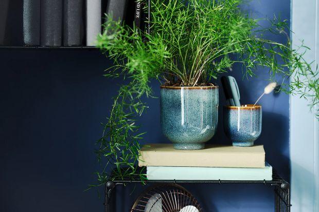Szukasz pomysłu na niedrogie i efektowne doniczki? Ceramiczne, w pięknym niebieskim kolorze to strzał w dziesiątkę!