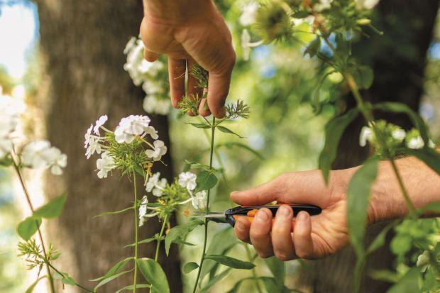 O kwiaty w ogrodzie trzeba dbać.Jeśli chcesz cieszyć się pięknymi kompozycjami przez cały sezon pamiętaj o doborze odpowiednich gatunków roślin do specjalnej rabaty, a także stałej pielęgnacji, w tym systematycznym usuwaniu przekwitłych k