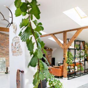 Ważną częścią aranżacji są piękne żywe rośliny. Projekt wnętrza: Szalbierz Design. Zdjęcia: Maja Musznicka Shine Studio