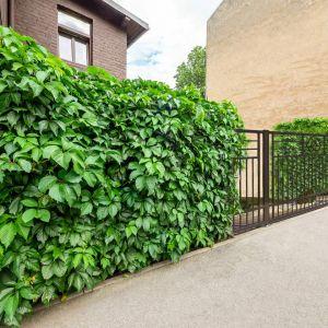 Zielony płoty, czyli ogrodzenie porośnięte roślinnością, ma wiele zalet. Fot. Plast-Met Systemy Ogrodzeniowe