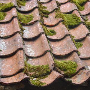 Jeśli na dachu znajdują się bardziej uporczywe zabrudzenia w tym zielone wykwity czy zatłuszczenia, należy je usunąć za pomocą profesjonalnych środków chemicznych. Fot. Jurga