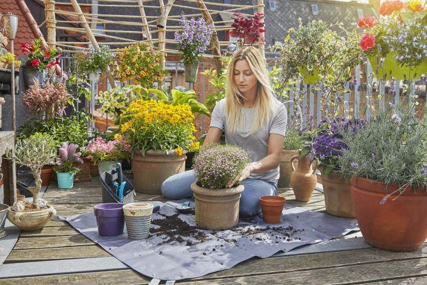 Ciepłe dni powoli się kończą, ale nie musi oznaczać to końca fascynacji ogrodem. To doskonały czas, aby zająć się balkonem czy tarasem i odkryć go na nowo – wprowadzić kwiaty w jesiennych kolorach, zasadzić rośliny cebulowe czy w końcu za