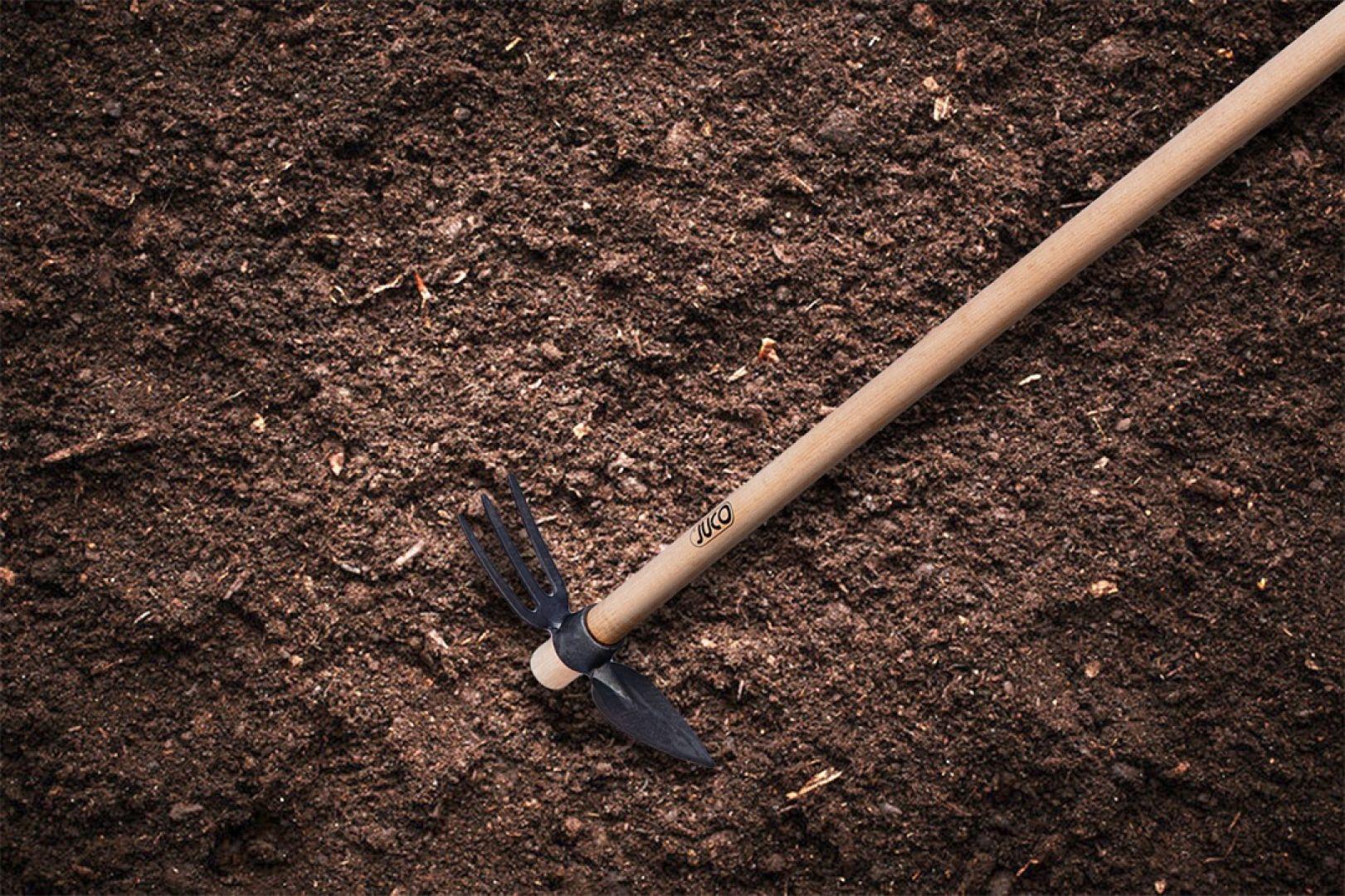 Odpowiedni dobór terminu wsadzenia cebulek sprawi, że dobrze się one ukorzenią, a na wiosnę nie zakwitną zbyt późno. Na zdjęciu: motyka trójzębna sercowa. Fot. Juco